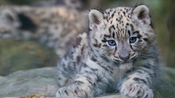 守护珍稀野生动物